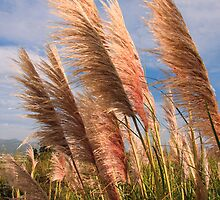 Long tall fluffy grass blowing in the wind by Sue Leonard