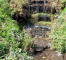 Waterfall in the woods by Sue Leonard
