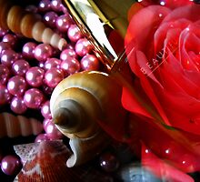 Rose and Shells. by Vitta
