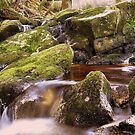 Woodland Stream at Glencree co, Wicklow. by Finbarr Reilly