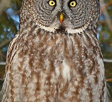 Up close and personal by Heather King