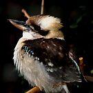 Cocaburra chick by loiteke