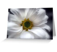 Tears On My Pillow.............Gerbera Greeting Card