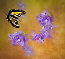 Lavender Blue Dilly Dilly by Diane Schuster