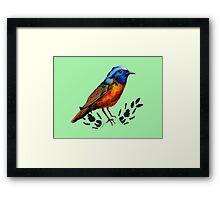 Redstart  - Bird Illustration Framed Print