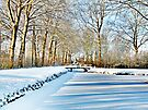 WINTER VIEW AT THE JULIANA PARK by Johan  Nijenhuis