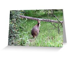 The friendly wallaby. Greeting Card