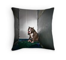Leli Waiting To Be Adopted Throw Pillow