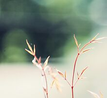 Autumn Bush by EmilyHoefman