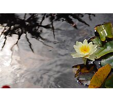 Water Lily and Reflections Photographic Print