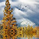 Winter Blessings by Diane Schuster