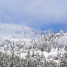 Snowing At the Top Of The World by Diane Schuster