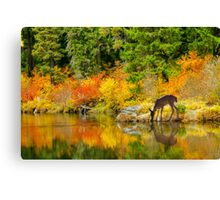 Tuti Fruti Colors and Eye Candy Reflections Canvas Print