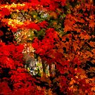 A View Through The Autumn Trees by Diane Schuster