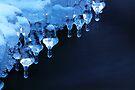 Blue Bells by Stephen Beattie