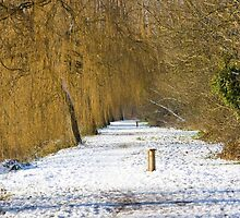 Winter Willows by Hoodle-Hoo