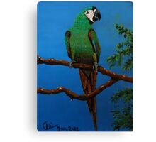 A Jubilant Green Macaw, All Alone Canvas Print