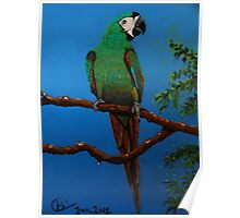 A Jubilant Green Macaw, All Alone Poster