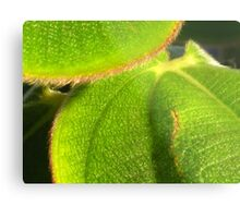 bright texture of nature Metal Print
