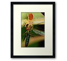 Eyes Too Big for His Stomach Framed Print