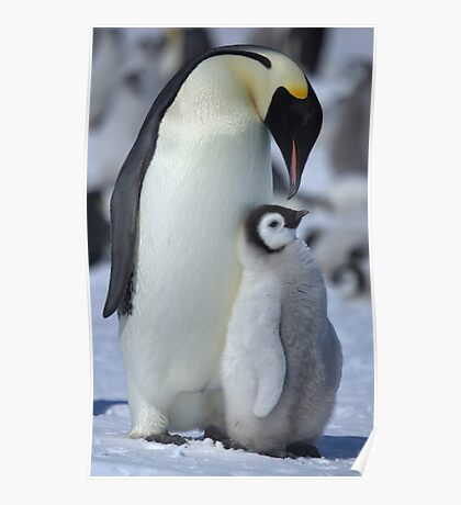Snowhill Emperor and Chick Poster