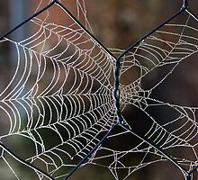 Cobwebs on the Fence by Eve Parry