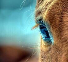 Horse Eye by Kim McClain Gregal