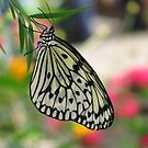 Delicate Paper Kite by shutterbug2010