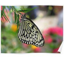 Delicate Paper Kite Poster