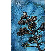 Bird in a Cracked-Up World Photographic Print