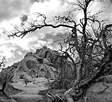 Joshua Tree by TeresaB