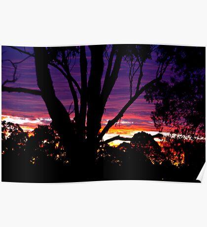 Sunset in my Backyard Poster
