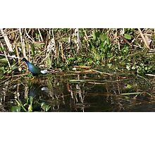 wonderful blue bird Photographic Print
