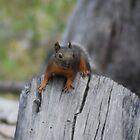 Squirrel  by Tori Snow