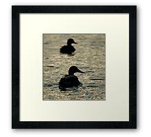 Ducks Away  Framed Print