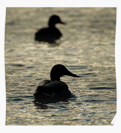 Ducks Away  Poster