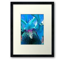 Aquamarine Iris Framed Print
