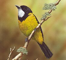 Golden Whistler by Cindy Lane