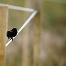 Bird on a Wire by Kyle Jerichow