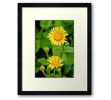 Leopards Bane Framed Print
