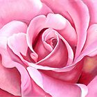 Pink Rose by Valentina Gatewood