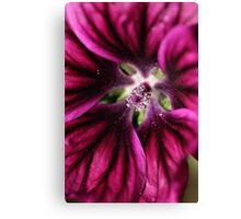 Style in Pink Canvas Print
