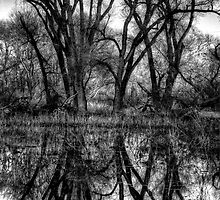Tree Lines in Black and White by Bob Larson