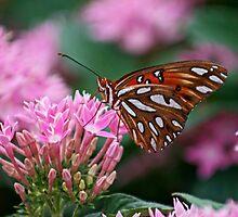 Flitter fluttering Fritillary Butterfly by Bonnie Robert