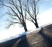Fish-eye Winter Trees by blakepack