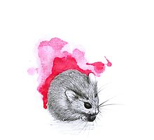 Red Hamster Photographic Print