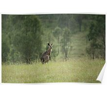 A Kangaroo in the Rain Poster