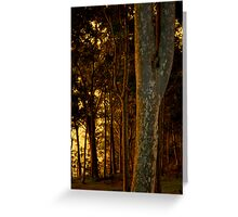 Warm light on the trees Greeting Card