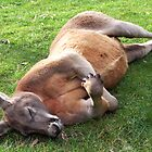 Kanga Nap by Judy Will