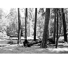 B&W Yosemite National Park forest landscape photography. Photographic Print